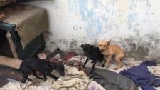 Maltratar cães e gatos pode dar cinco anos de cadeia