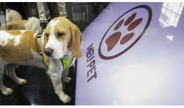 SP vai construir mais oito clínicas veterinárias do programa Meu Pet no estado