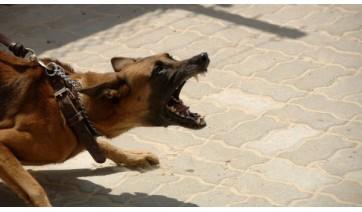 Energisa Sul-Sudeste pede apoio da comunidade para evitar ataques de cães a leituristas