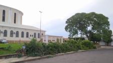 Para construção de estacionamento, árvores são removidas do entorno da Igreja Matriz