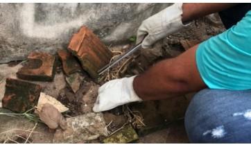 Agente da equipe do Controle de Vetores faz busca ativa nos imóveis, à procura de escorpiões (Imagem: Assessoria de Imprensa).