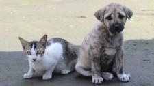 Lucélia lança programa municipal de castração para cães e gatos