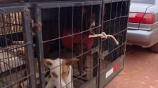 Polícia Ambiental flagra homens com cães praticando caça em Lucélia