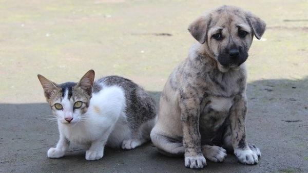 Programa municipal oferece castração gratuita para cães e gatos, machos e fêmeas (Imagem de Rohit Tripathi por Pixabay).
